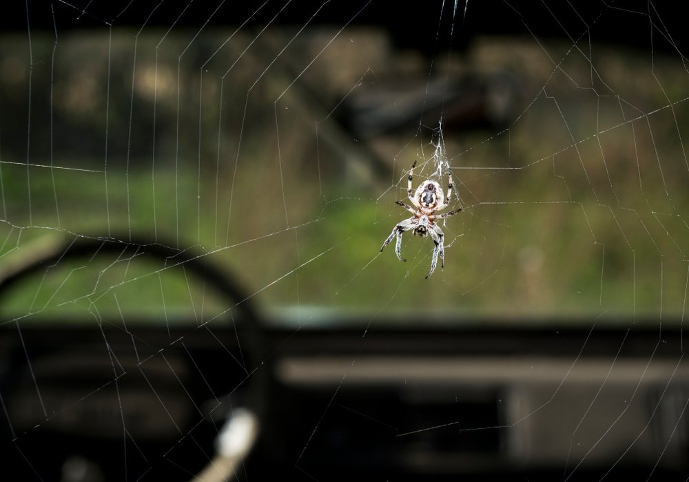 Spiders in the Car